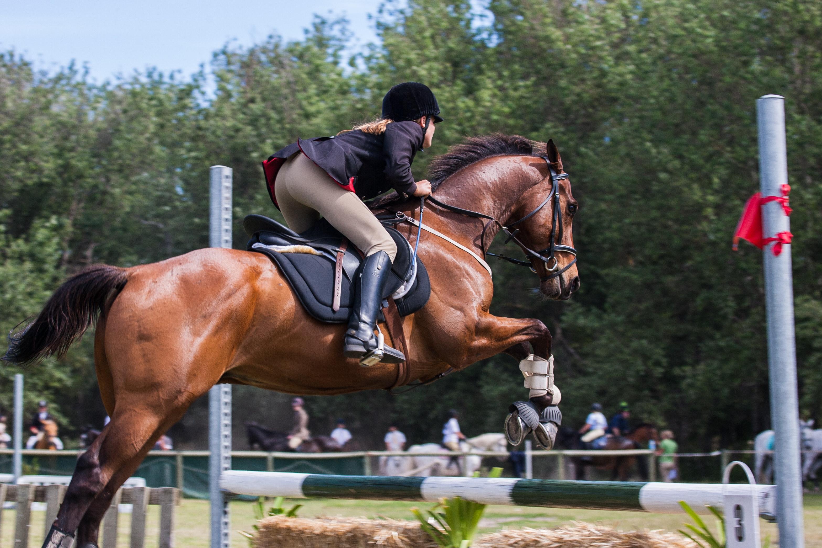 Equitazione e mental training